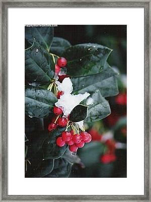 Berries In The Snow Framed Print