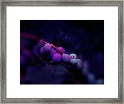 Berries Framed Print by Julian Cook
