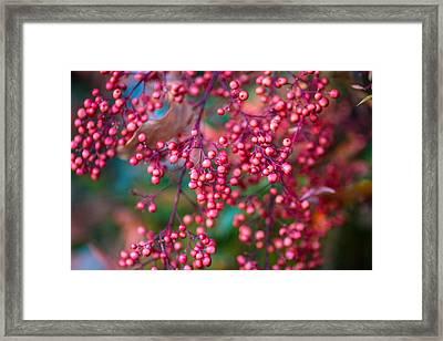 Berries Framed Print by Mike Lee