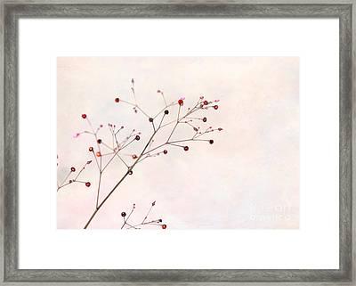 Berries On A Branch Framed Print by Sabrina L Ryan
