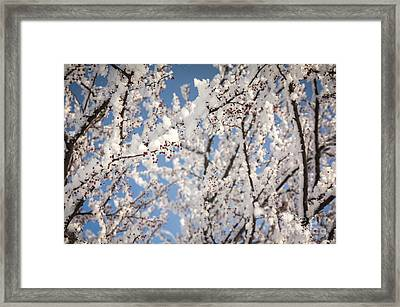 Framed Print featuring the photograph Berries With Frost by Kari Yearous