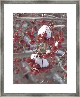 Berry Basket Framed Print by Christina Verdgeline