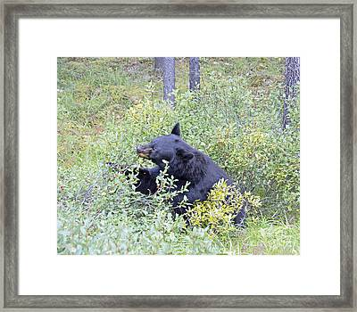 Berry Bear Framed Print