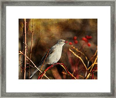 Berry Delighted Framed Print by Donna Kennedy