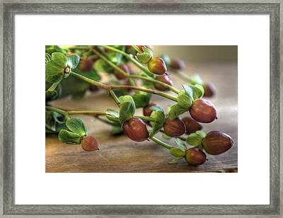 Berry Framed Print by Jane Linders