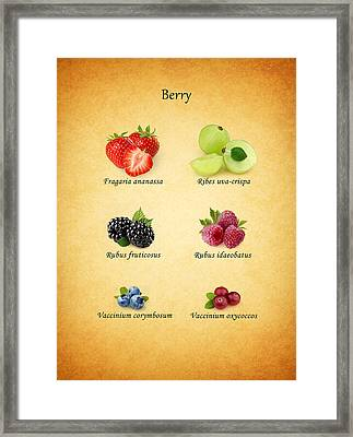 Berry Framed Print by Mark Rogan