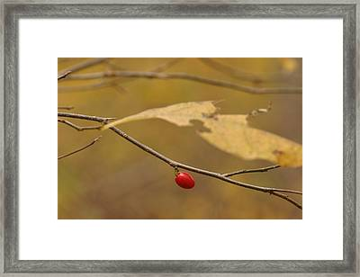 Berry Framed Print by Mark Russell