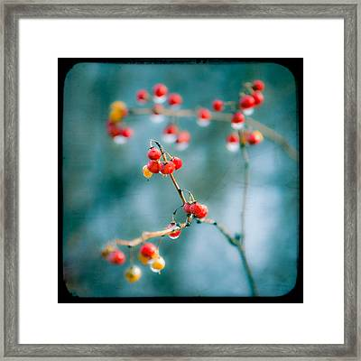 Berry Nice - Red Berries - Winter Frost Icy Red Berries - Gary Heller Framed Print by Gary Heller