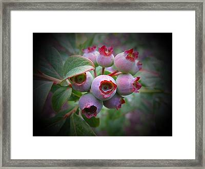Berry Unripe Framed Print by MTBobbins Photography