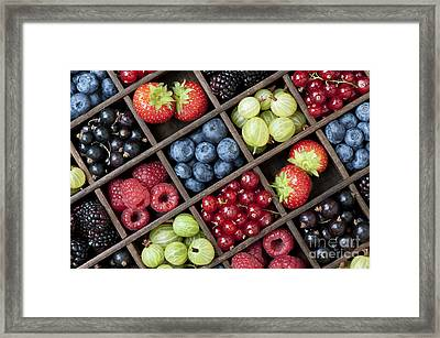 Berrylicious Framed Print by Tim Gainey