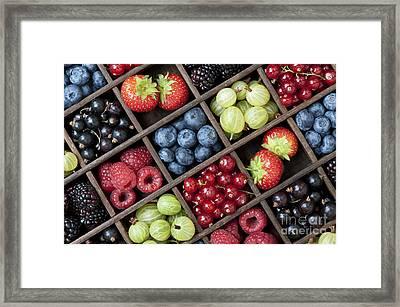 Berrylicious Framed Print