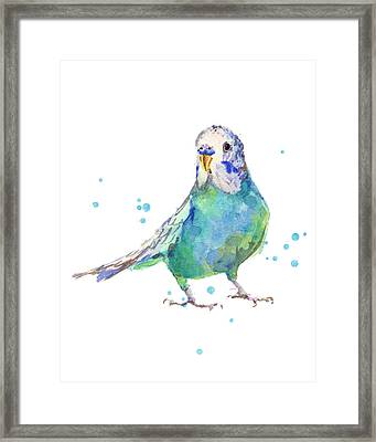 Bertie Wonderblue The Budgie Framed Print