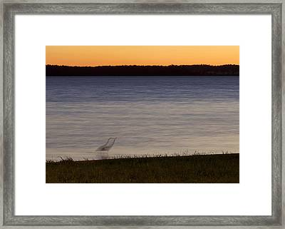 Beside Myself - Great Blue Heron At Sunset Framed Print by Jane Eleanor Nicholas