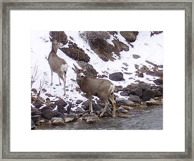 Beside The River Framed Print by Yvette Pichette