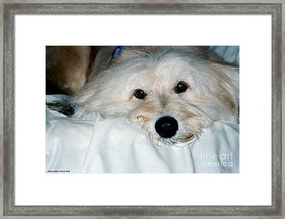 Bessie Eyes Framed Print by Randi Shenkman