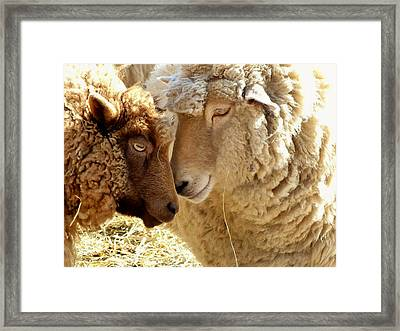 Best Buddies Framed Print