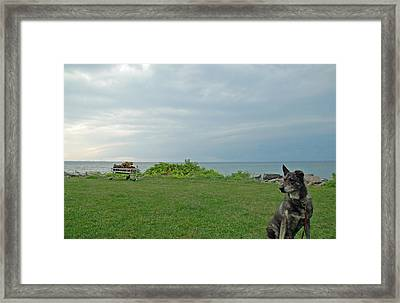 Best Friend Framed Print by Aimee L Maher Photography and Art Visit ALMGallerydotcom