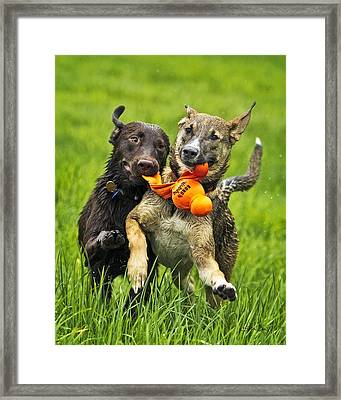 Best Friends 2011 Framed Print by Joan Davis