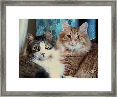 Best Friends Framed Print by Deborah Smolinske