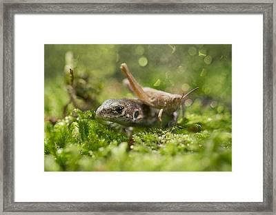 Best Friends Ever Framed Print by Jaroslaw Blaminsky