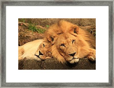 Best Friends For Life Framed Print