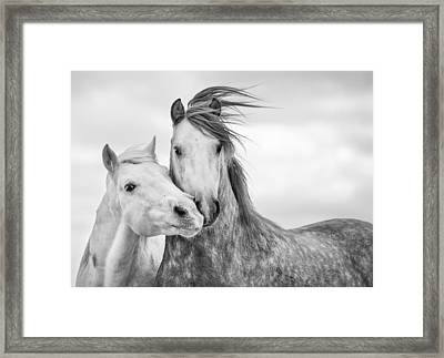Best Friends I Framed Print by Tim Booth