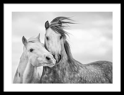 Friendship Framed Prints