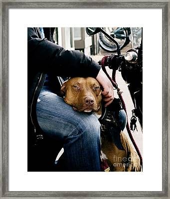 Best Pal Framed Print by Ivy Ho