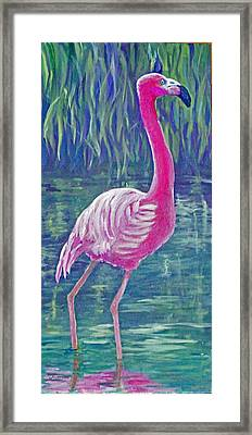 Beta's Flamingo Framed Print