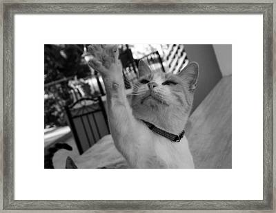 Bette High Five Framed Print by Anita Dale Livaditis
