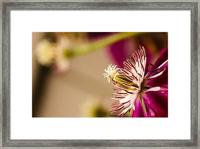 Framed Print featuring the photograph Better Days by Cathy Donohoue