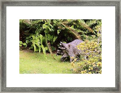 Better Run Thru The Jungle Framed Print by Kym Backland