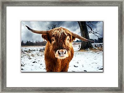 Betty The Cow Painting Framed Print by Marvin Blaine