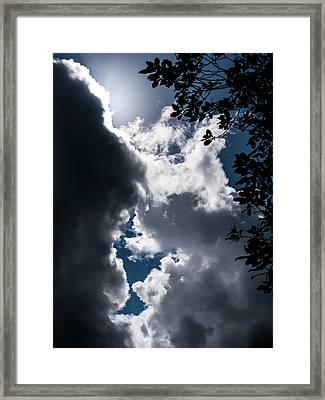 Between A Tree And The Sky Framed Print by Hakon Soreide