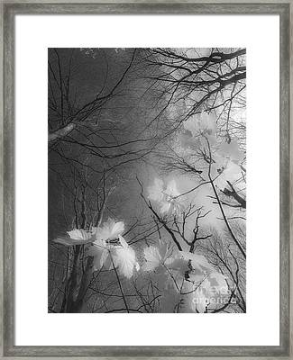 Between Black And White-02 Framed Print
