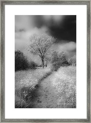 Between Black And White-23 Framed Print