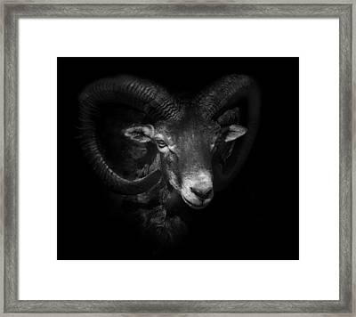 Between Horns Framed Print