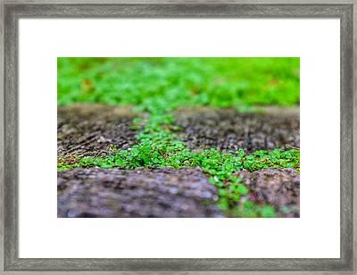Between Stones Framed Print by Chris Bordeleau
