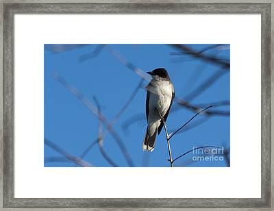 Between The Branches Framed Print by Meredith Moore