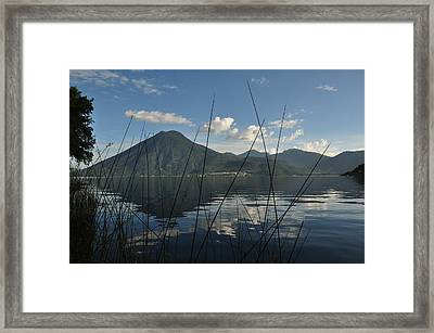 Between The Grass Framed Print
