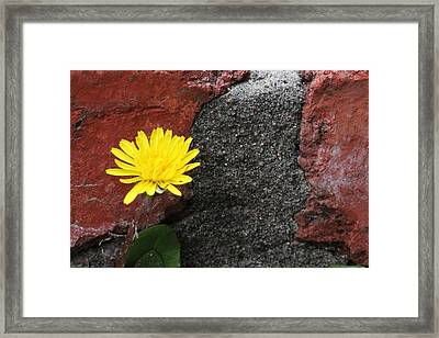 Between The Rocks And A Hard Place Framed Print by Lorri Crossno