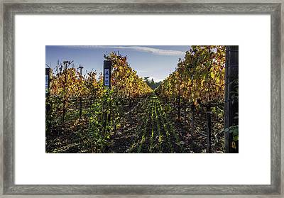 Between The Rows Framed Print by Bill Gallagher