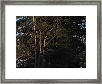 Between The Trees Framed Print by Adam Smith