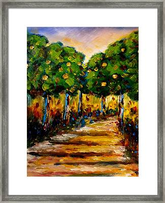 Between The Trees Framed Print by Constantinos Charalampopoulos
