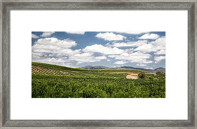 Between The Vines Framed Print by Peter Tellone
