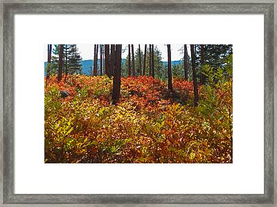 Beulah Series #3 Framed Print by Tammy Sutherland