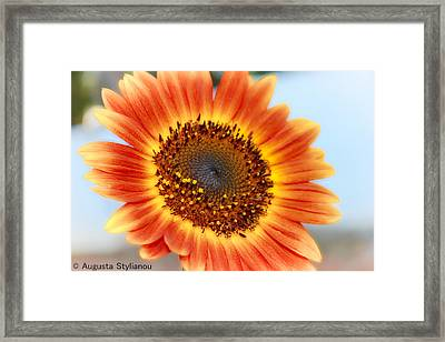 Beutiful Sunflower Framed Print by Augusta Stylianou