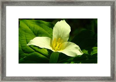 Beauty Is A Three Petaled Flower Framed Print