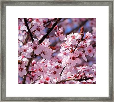 Bevy Of Blossoms Framed Print
