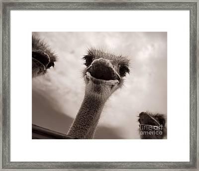 Beware The Feeding Framed Print by Royce Howland